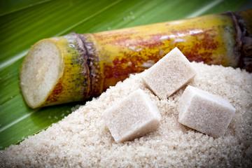 Canne à sucre