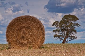 Bale plus Tree