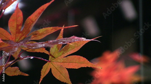 Japanese Autumn Impression