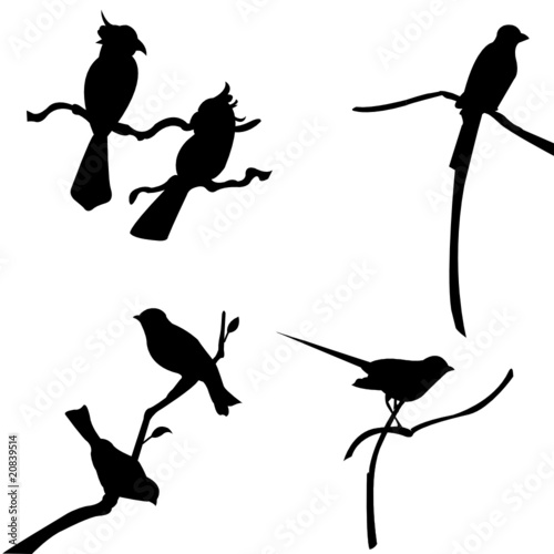 Sparrow Silhouette Flying Flying Sparrow ...