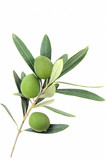 Isolated olive branch