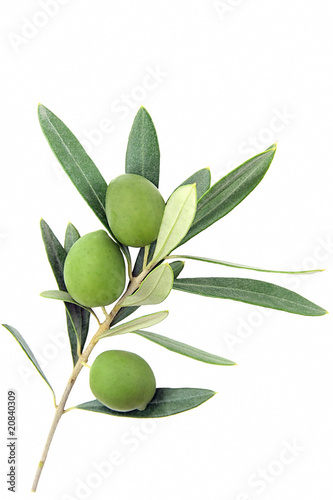 Isolated olive branch - 20840309