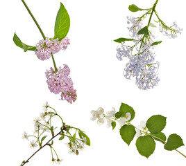 lilac, jasmine and cherry blossom