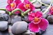 Orchideenblüten auf Kieselsteinen