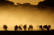 Blue wildebeest in dust, Kalahari desert, South Africa