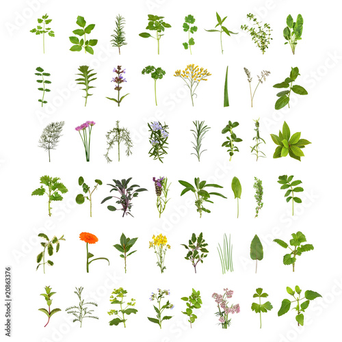 Large Herb Leaf and Flower Collection