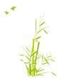 bambou et oiseaux mouches