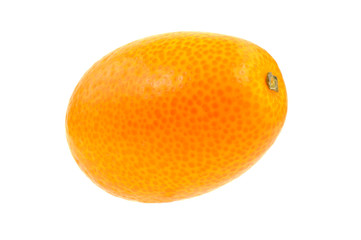 Single Kumquat