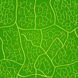Seamless macro leaf bright veins pattern poster