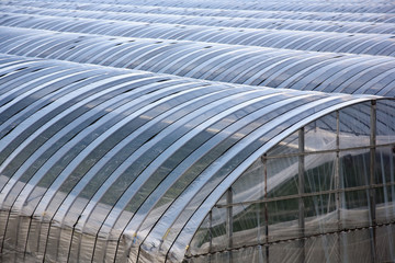 Greenhouses lined up