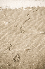 Bird tracks in the winter sand