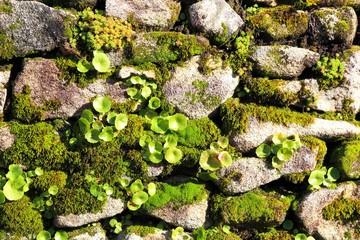 Background Natur Steine Mauer Moos Flechten