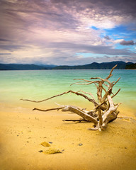 Tranquil mountain lake with driftwood on beach nature landscape