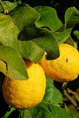 Limone biologico
