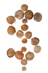 isolated shell letter $