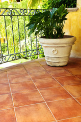 Plant on tiled Mexican veranda