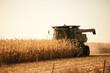 harvesting - 20927153
