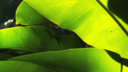 Rainforest Leaves in Close-up