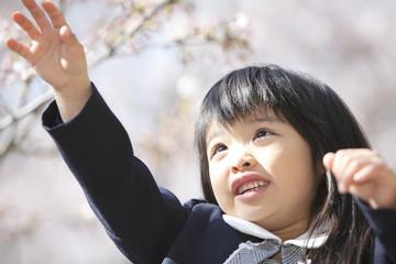 桜の花を触ろうとする小学生女子