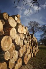 Geschlichtetes Holz
