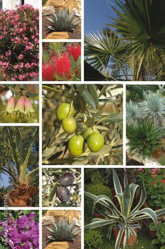 plantes méditerranéenne