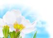 blue sky spring flower and sun - decoration border