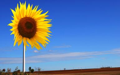 éolienne tournesol panneau solaire
