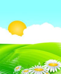Décor ciel bleu et champs verts