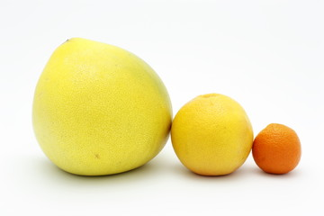 Family of citrus