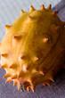 Horngurke