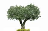 oliver centenaire