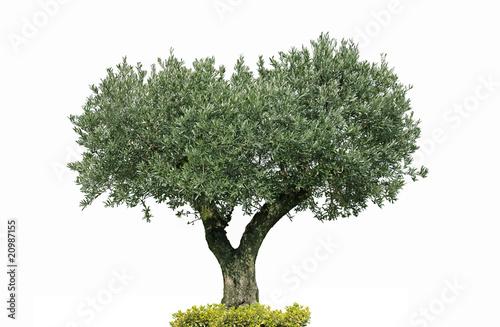 Staande foto Olijfboom oliver centenaire