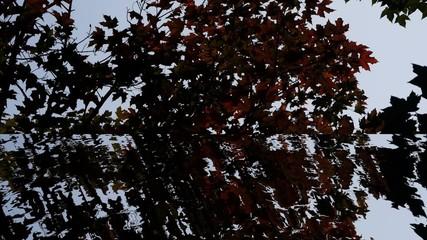 Reflejo de hojas