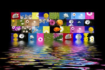 fotos flores diversas fondo negro reflejo