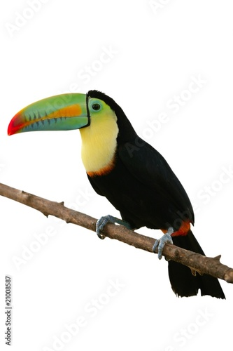 papier peint toucan oiseau color en arri re plan blanc cancun. Black Bedroom Furniture Sets. Home Design Ideas