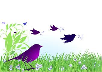 Vögel auf Wiese