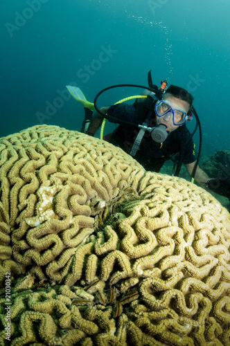 male scuba diver behind big brain coral