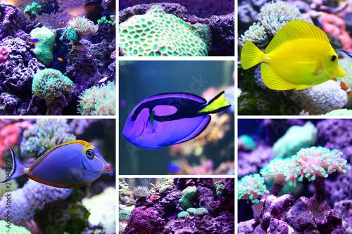 poisson exotique dans un aquarium de christophe fouquin photo libre de droits 21047139 sur. Black Bedroom Furniture Sets. Home Design Ideas
