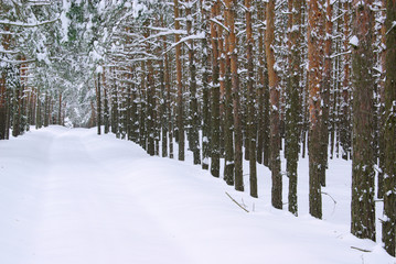Wald im Winter - forest in winter 32
