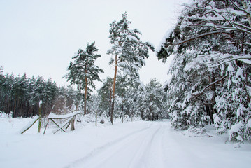 Wald im Winter - forest in winter 41