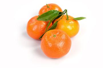 Quattro clementine