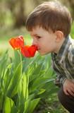 Fototapety Little boy smelling tulip