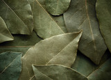 Dried laurel leaf background