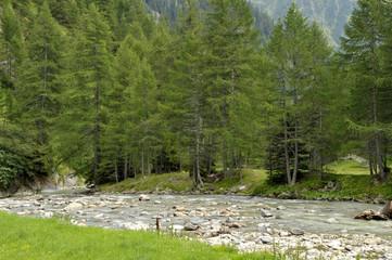 conifere Val Passiria