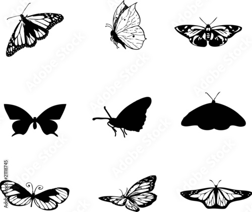 Butterfly Vector, Butterfly Vector Pictures