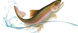 Fototapety Jumping trout