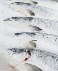 Salmon on cooled market display