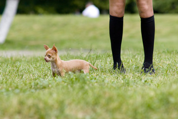 Legs and dog on the lawn