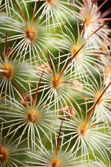 a sharp cactus