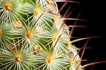 macro spikes of cactus
